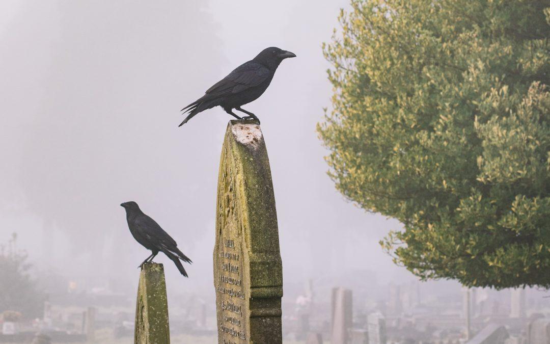 Os enterros. A Peste segundo Camus (VII)