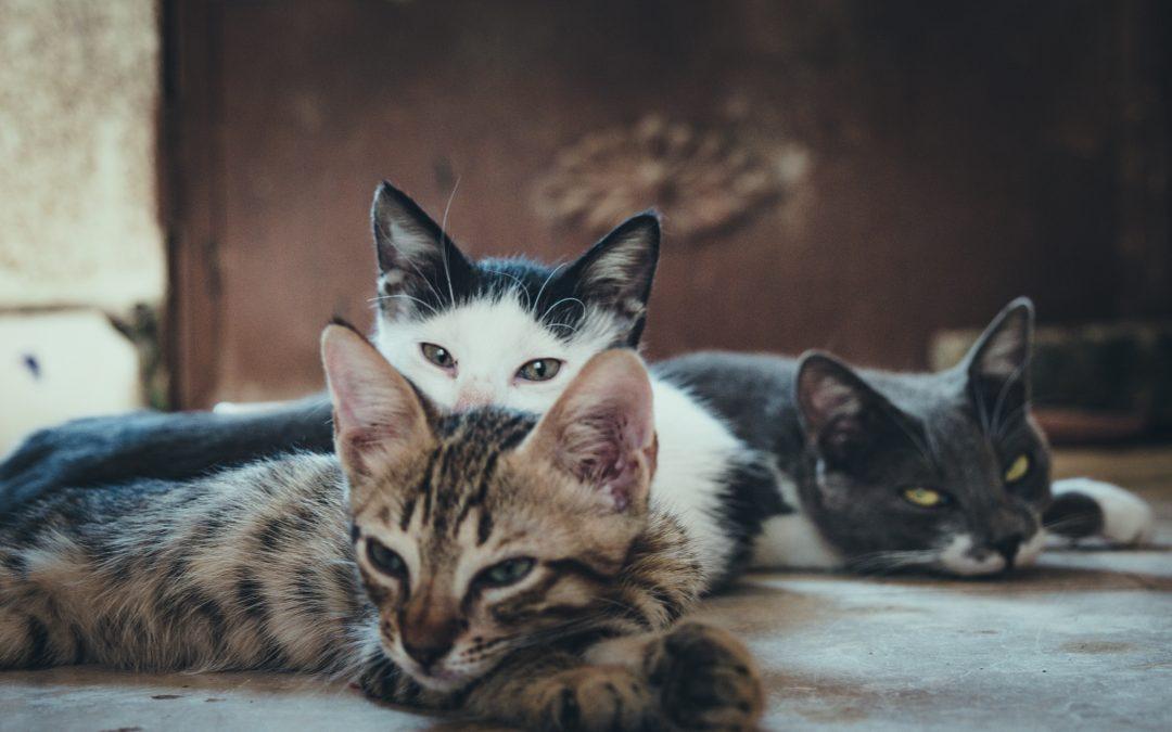 Os gatos mimosos de Istanbul